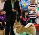 Whisky Crufts 2011