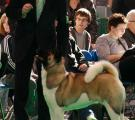Whisky_Crufts 2010