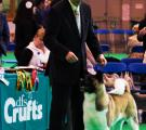 Whisky_Crufts2010